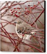 Mockingbird In Winter Rose Bush Canvas Print