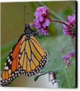 Monarch In The Rain Canvas Print
