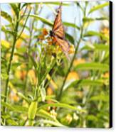 Monarch Is Indeed King Of The Butterflies Canvas Print by Dustie Meads