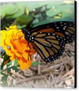Monarch Canvas Print by Trina Prenzi