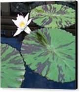 Monet Lilies White  Canvas Print