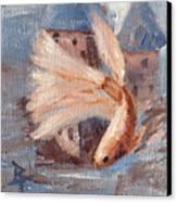 Mongo Betta Fish Canvas Print by Brenda Thour