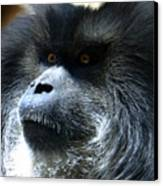 Monkey Stare Canvas Print