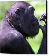 Monkey Thinking Canvas Print