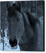 Moonlit Stallion Canvas Print