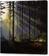 Morning Glow In The Forest Canvas Print by David Hawkes