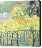 Morning In Napa Valley Canvas Print by Barbara Anna Knauf