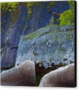 Moss And Rocks Canvas Print by John Daly