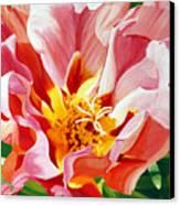 Moss Rose Canvas Print
