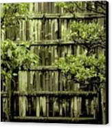 Mossy Bamboo Fence - Digital Art Canvas Print by Carol Groenen