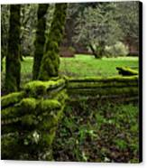 Mossy Fence 2 Canvas Print by Bob Christopher