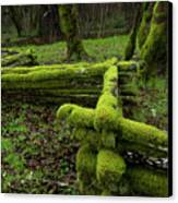 Mossy Fence 4 Canvas Print by Bob Christopher