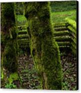 Mossy Fence Canvas Print by Bob Christopher