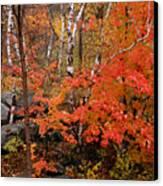 Mother Nature's Palette Canvas Print