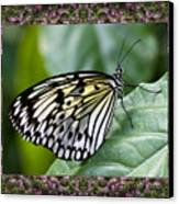 Mountain Butterfly Canvas Print by Bell And Todd