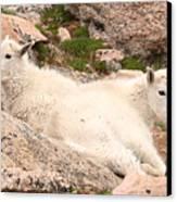 Mountain Goat Twins Canvas Print