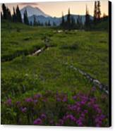 Mountain Heather Sunset Canvas Print
