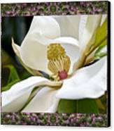 Mountain Magnolia Canvas Print by Bell And Todd
