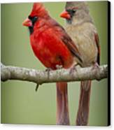Mr. And Mrs. Northern Cardinal Canvas Print by Bonnie Barry