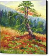 Mt. Jumbo Tree Ak Canvas Print