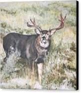 Muley Canvas Print