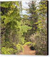 Munro Trail Canvas Print by Ron Dahlquist - Printscapes