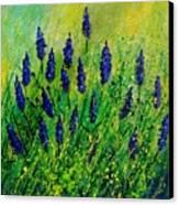 Muscaris 4590 Canvas Print
