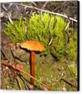 Mushroom Microcosm Canvas Print