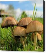 Mushroom Canvas Print by Sheila Werth