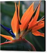 My Bird Of Paradise Canvas Print by Valia Bradshaw