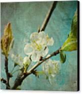 My Springtime Canvas Print