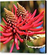 Naked Coral Tree Flower Canvas Print by Mariola Bitner