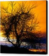 Naked Tree Canvas Print