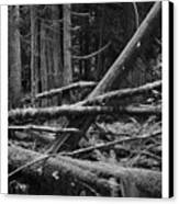 Natural Forest Canvas Print