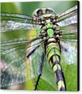 Natural Stained Glass Canvas Print