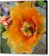 Nature In The Wild - Cactus Honey Canvas Print