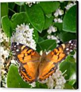 Nature In The Wild - On Golden Wings Canvas Print