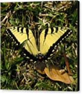 Nature In The Wild - Splendor In The Grass Canvas Print