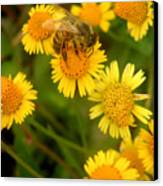Nature In The Wild - The Nectar Company Canvas Print