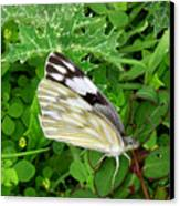 Nature In The Wild - Visiting With The Greens Canvas Print