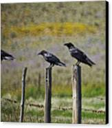 Neighborhood Watch Crows Canvas Print