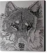 Wolf. Canvas Print by Cynthia Adams