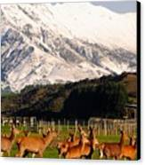 New Zealand Deer 3497 Canvas Print