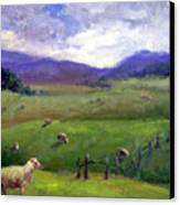 New Zealand Sheep Farm Canvas Print