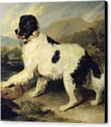 Newfoundland Dog Called Lion Canvas Print by Sir Edwin Landseer