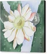 Night Bloomers Canvas Print