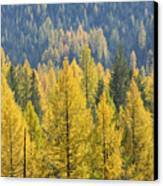 North Idaho Gold Canvas Print