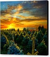 Not Forgotten Canvas Print by Phil Koch