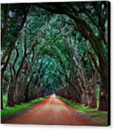 Oak Alley Road Canvas Print by Perry Webster