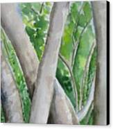 Oak Creek Trees Canvas Print